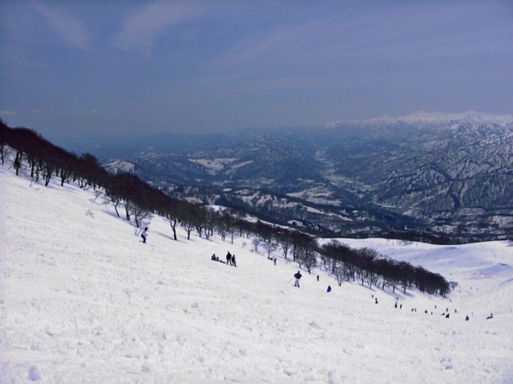 県 場 滋賀 スキー
